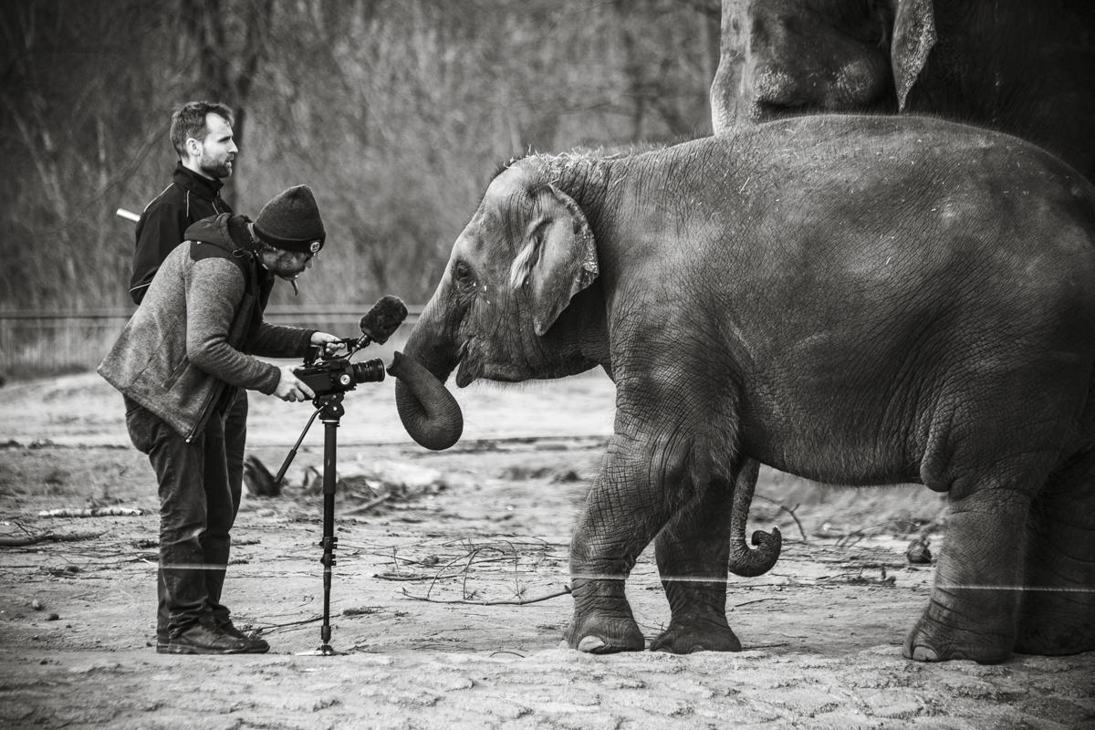 Elefant-0142