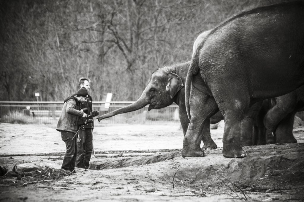 Making-Of Imagefilm mit Edgar, dem Baby-Elefanten im Zoo Berlin